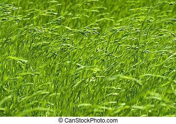 grønne, flax