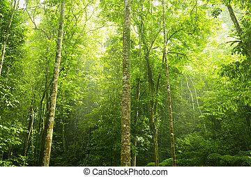 grønne, forest.