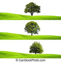 grønne, miljø, og, træ