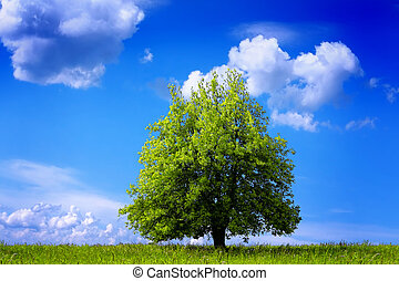 grønne, miljø
