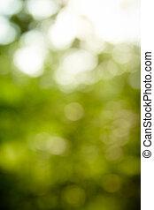 grønne, naturlig, baggrund, i, brændvidde, skov, (bokeh)