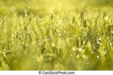 grønne, sløre, baggrund, af, en, græs, på, en, felt