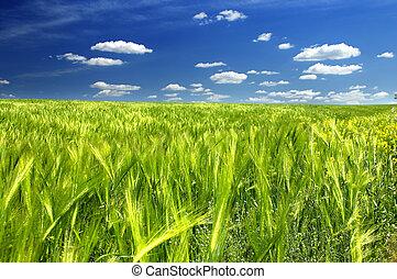 grønnes felt