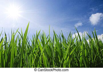grønnes græs, og, himmel
