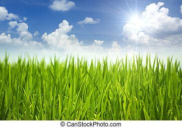 grønnes græs, og, sky.