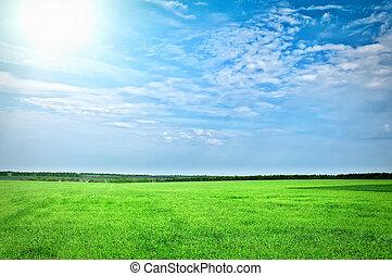 grønnes græs, under, blå himmel