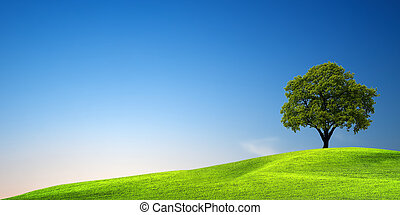 grønnes træ, hos, solnedgang