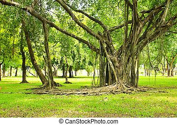 grønnes træ, park
