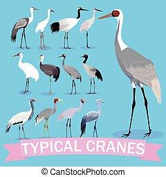grúas, vector, conjunto, birds., típico, cartoon., ...