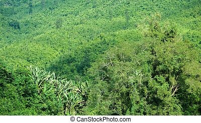 grün, üppig, von, tropische , dschungel, wald, in, laos