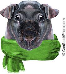 grün, aquarell, dünn, schal, weißes, schwein, guinea, ...