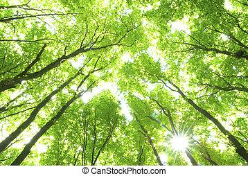 grün, Bäume