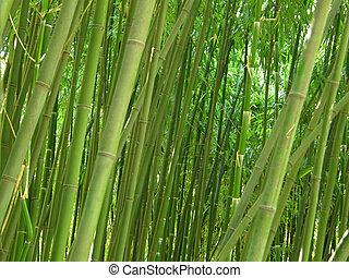 grün, bambus