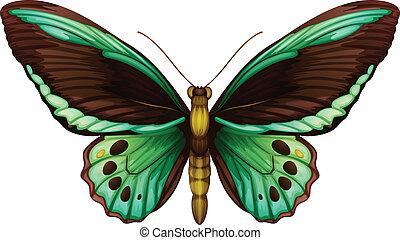 grün, birdwing, gemeinsam