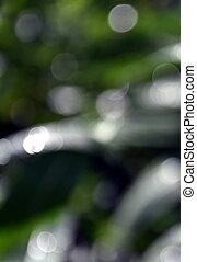 grün, bokeh, fokus, hintergrund, von, natur, wald