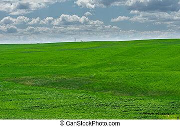 grün, felder, von, neu, gepflanzt, weizen