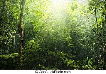 grün, forest.