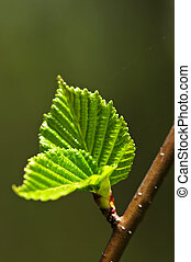 grün, fruehjahr, blätter