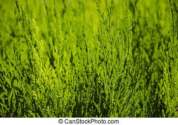 grün, hintergrund