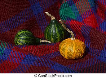 grün, kürbise, mit, orange, warty, dekorativ, kã¼rbis, auf,...