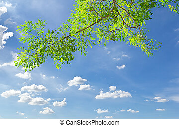 grün, lassen, gegen, blauer himmel