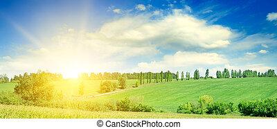 grün, mais feld, und, hell, sonnenaufgang, ., breit, photo.