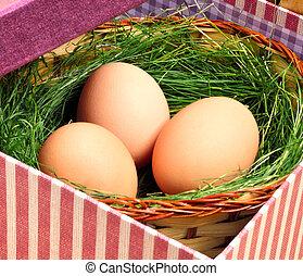 grün, nest, mit, eier, in, der, korb