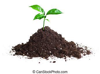 grün, pflanzenkeim, gewachsen, auf, gartenerde, isolieren