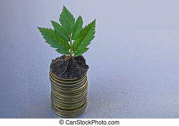 grün, pflanzenkeim, in, der, boden, auf, a, haufen , von, geldmünzen