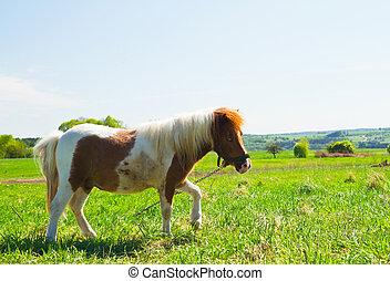 grün, pony, wiese