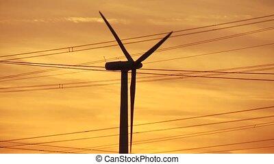grün, sonnenuntergang, energie