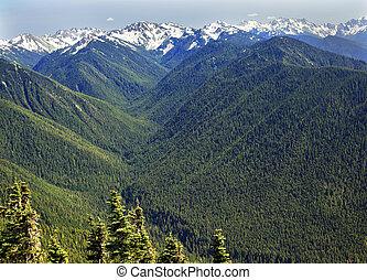 grün, täler, nadelbäume, schnee, berge, hurricaine, bergrücken, olympischer nationalpark, staat washington , pazifischer nordwesten, bergrücken, linie