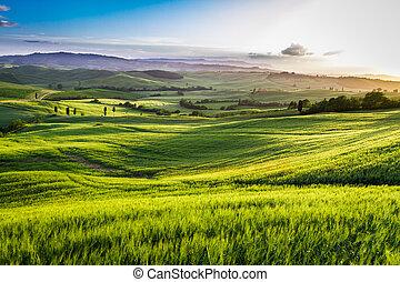 grün, tal, an, sonnenuntergang, in, toscana