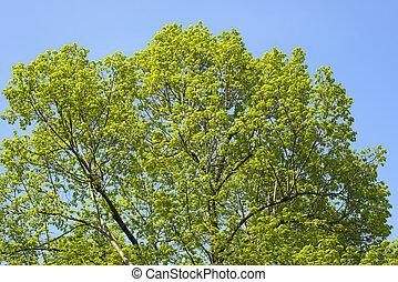 grün, treetop