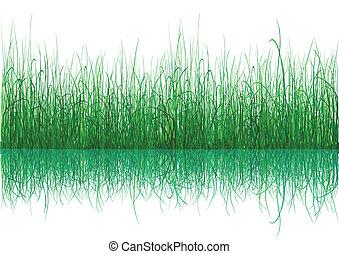 grün weiß, gras, -, freigestellt