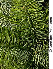 grün, weihnachten, hintergrund
