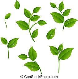 Blätter-Schaufer