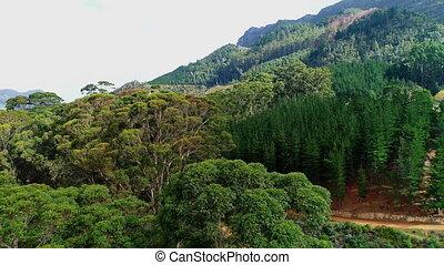 grüne bäume, auf, der, gebirgsneigung, 4k