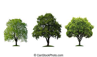grüne bäume, freigestellt