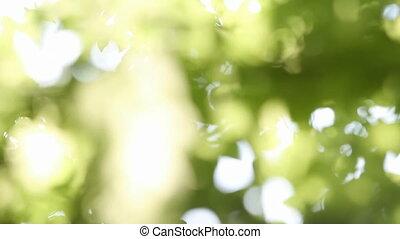 grüne blätter, auf, baum
