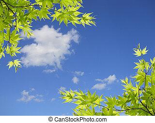 grüne blätter, auf, himmelsgewölbe, hintergrund