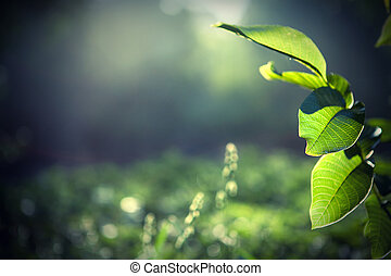 grüne blätter, mit, sonne