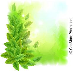 grüne blätter, sonnig, hintergrund