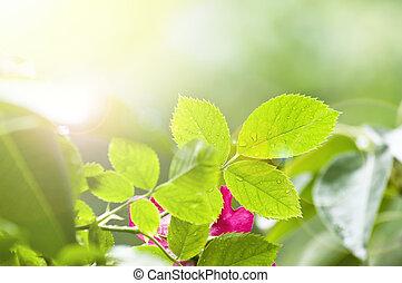 grüne blätter, und, helle sonne