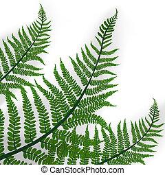 grüne blätter, von, tropische , farn, pflanze, mit, schatten