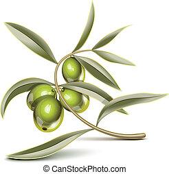 grüne oliven, zweig