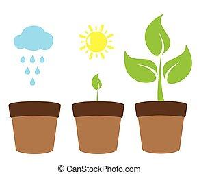 grüner baum, pflanze
