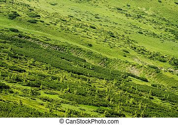 grüner berg, hintergrund