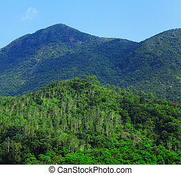 grüner berg, landschaftsbild, mit, bäume