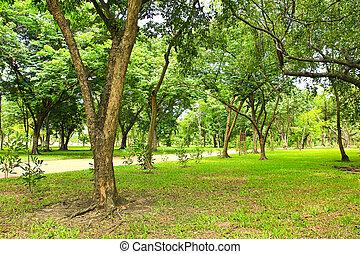 grüner park, bäume